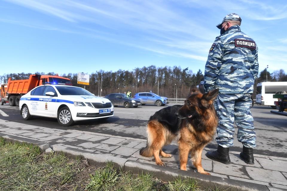 Обнаружить преступников помогла служебная собака
