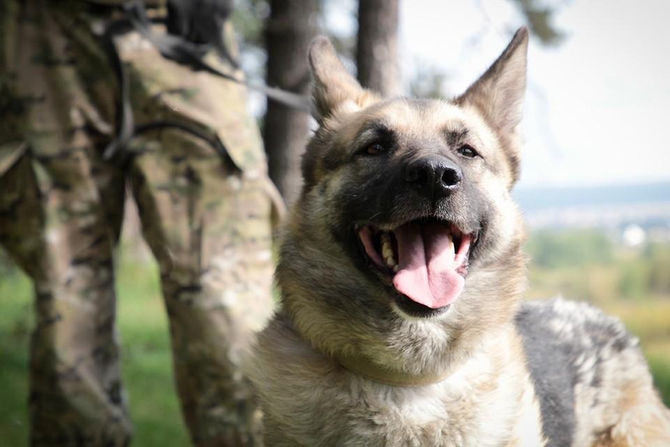 Лежал с переломами на обочине: 240 тысяч рублей потратили волонтеры Иркутска на лечение пса.