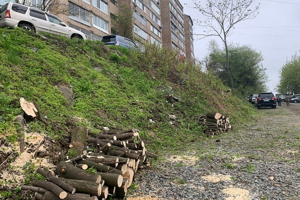 Жителям домов по Красного знамени удалось приостановить вырубку деревьев.