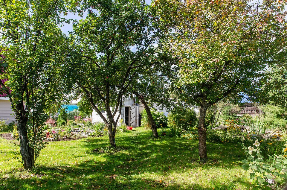 Июнь - время для обработки деревьев и кустарников от вредителей