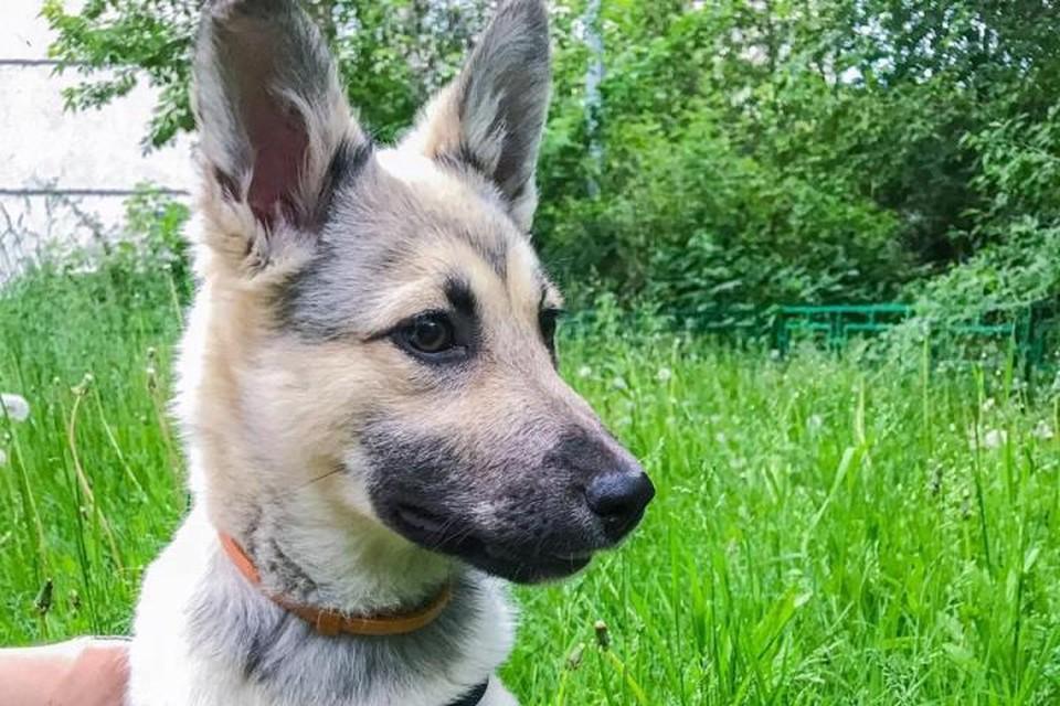 Гера очень похожа на породистую собаку. Но оказалось, на службе важна не порода, а способности! Фото Анны Луганцевой