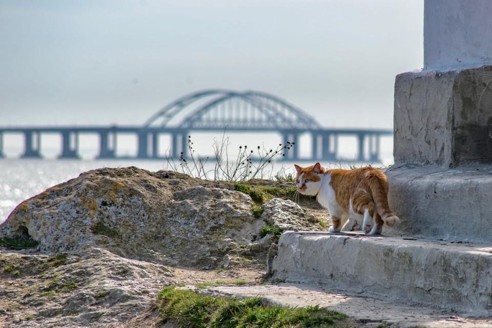 Кот покидает Крымский мост. Фото: кот Моста/VK
