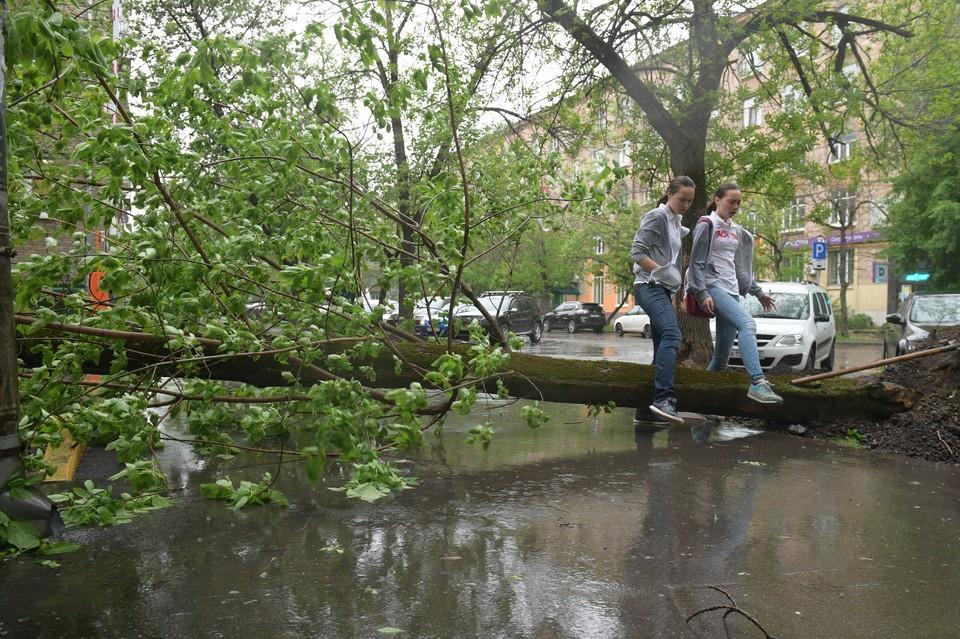 49 испорченных машин, 116 поваленных деревьев, больше всего в Юго-Западном, Северном округах и Зеленограде.
