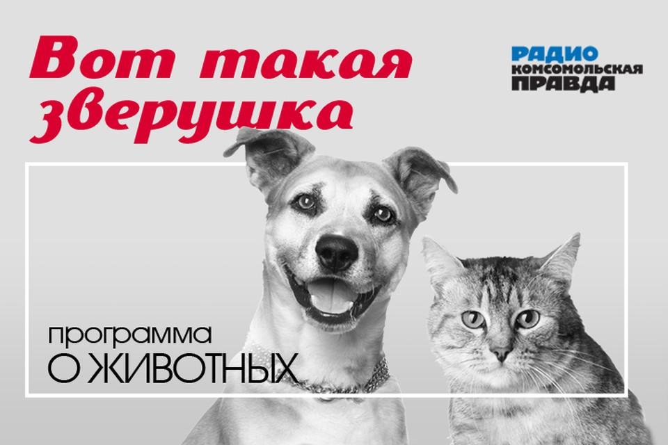 Поездки с собаками. Как не забыть самое важное?
