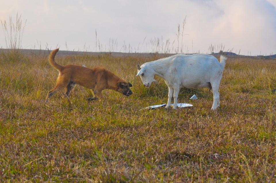Бедное животное провалилась в яму, которая оказалась бесхозным резервуаром. Фото: shutterstock.com.