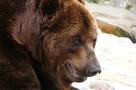 Что делать, если встретил медведя в лесу: пять важных советов