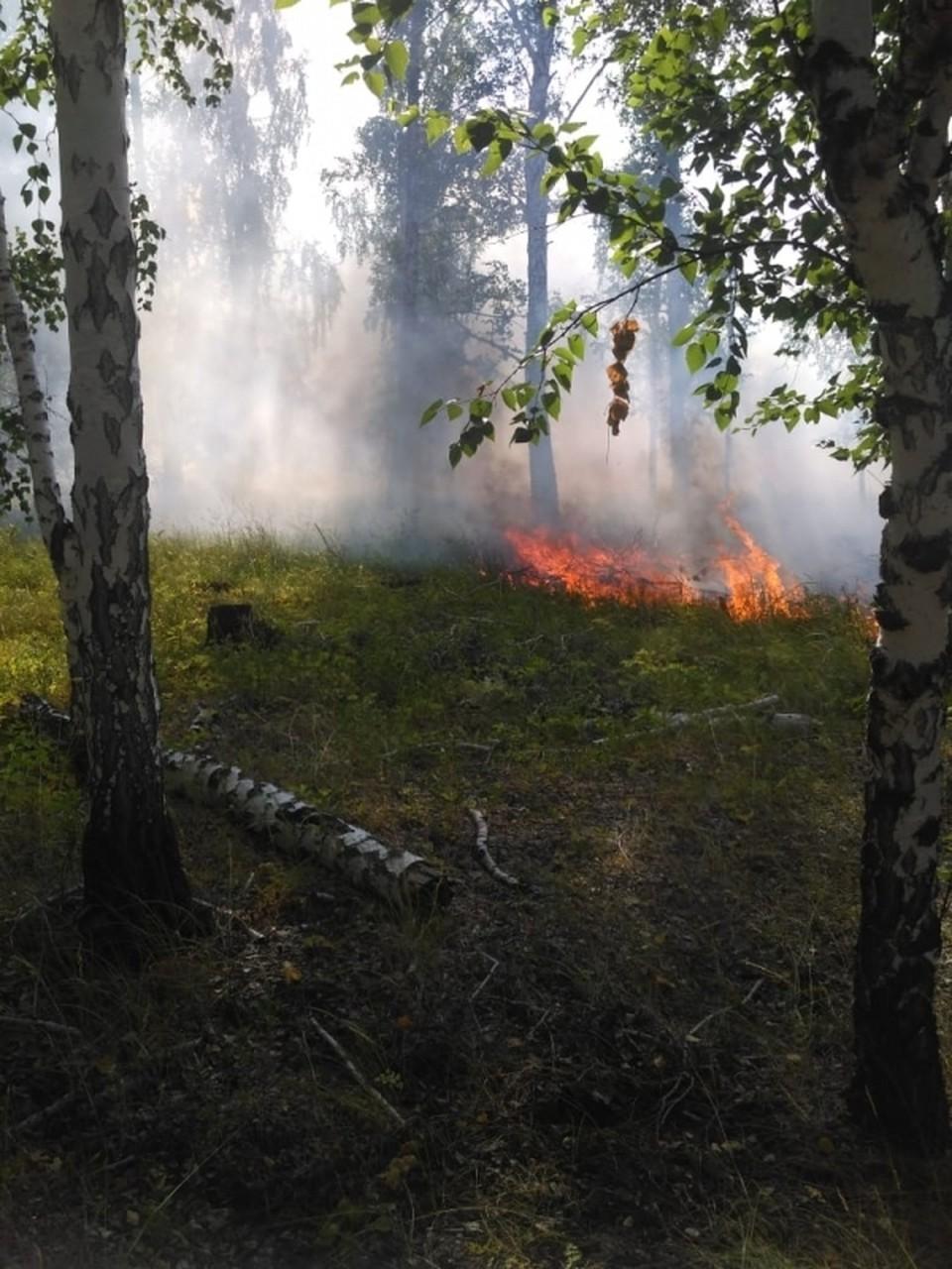 Лесной пожар в Курганской области Фото: пресс-служба Губернатора Курганской области