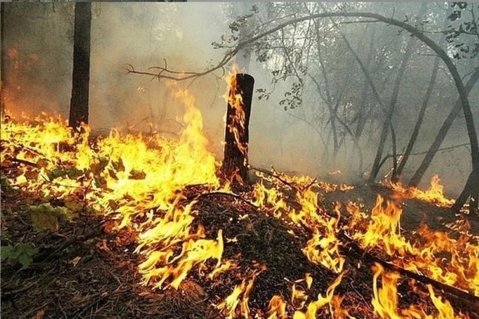 В донском регионе установится пожароопасность пятого класса.