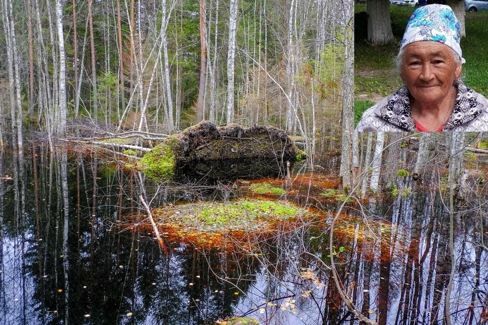 Пенсионерка выжила в лесу после 18 дней блужданий