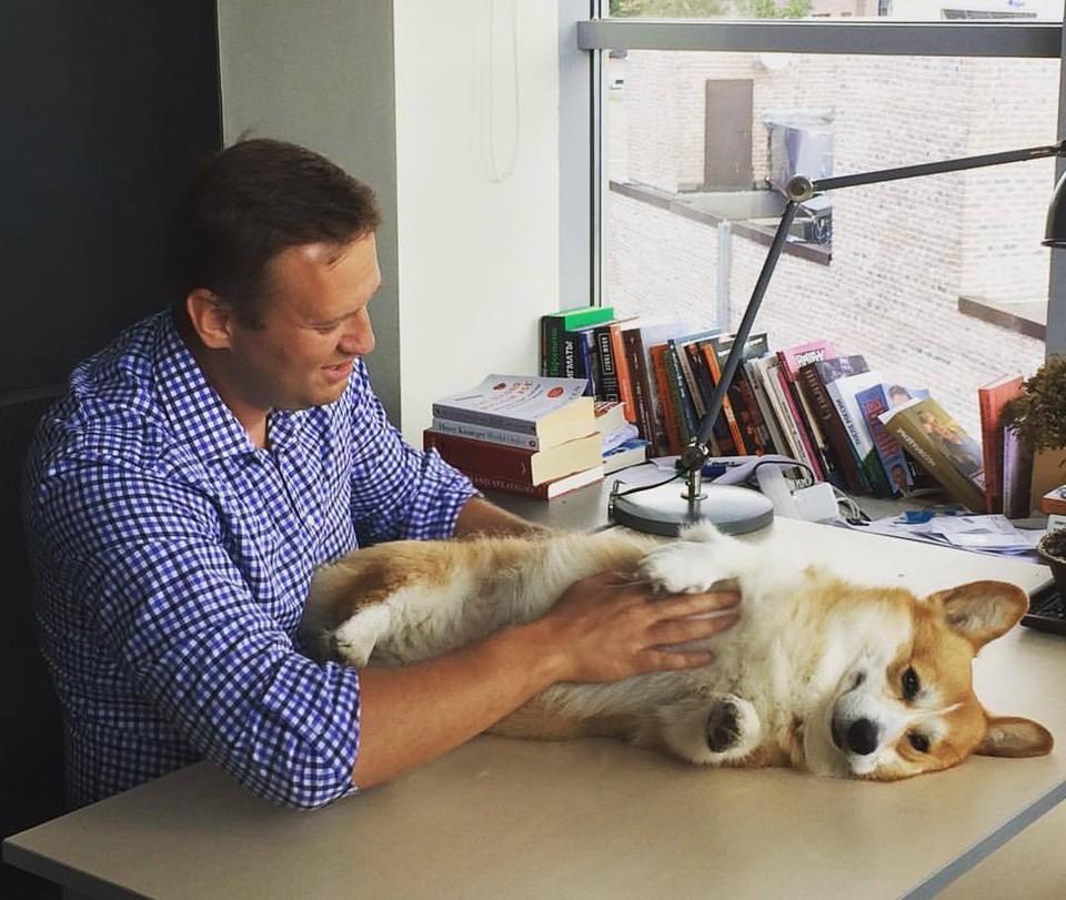Алексей Навальный, по некоторым данным, находится на аппарате ИВЛ.