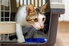 «Ласковая и добрая»: в Сочи отказываются от трехлапой кошки