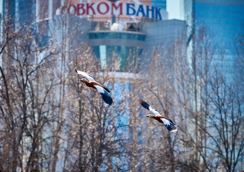 Совкомбанк профинансирует предприятия, создающие новые рабочие места и использующие в своем производстве местных поставщиков. Фото: ПАО «Совкомбанк»