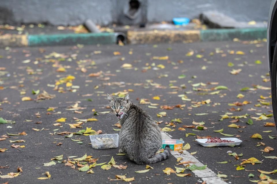 Подвалы столичных многоэтажек часто служат домом для городских котов, но не всех устраивают такие соседи.