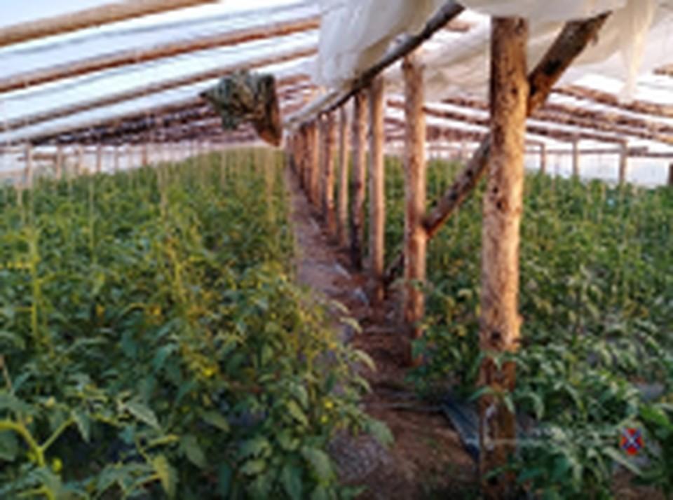 Теплицы, в которых выращивают странные овощи, окружают Волгоград со всех сторон.