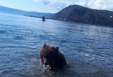 Это Сибирь, детка: видео прогулки с медведем на поводке появилось в соцсетях