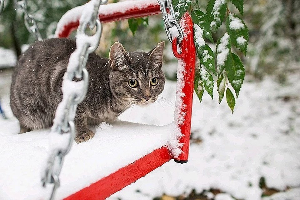 Правда снег растает очень быстро и превратится в грязные лужи