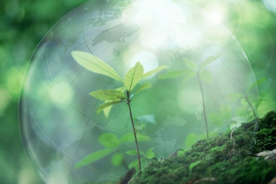 Всероссийское общество охраны природы предлагает создать глобальную систему безопасности для сохранения лесов.