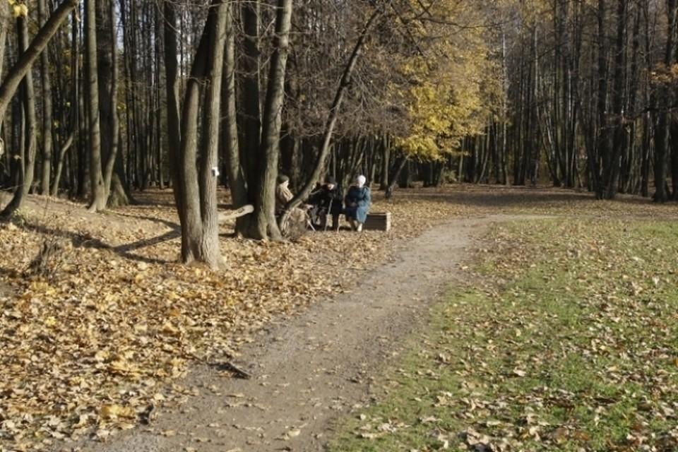 В ближайшие пять дней в России сохранится аномально теплая погода