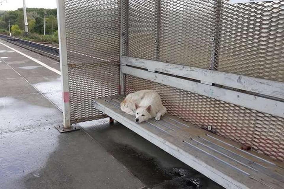 Собака ждет хозяина уже несколько недель. Фото: Елена Никитина на Facebook.