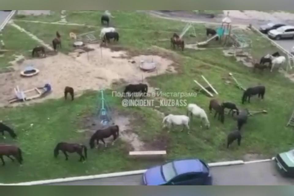 "Лошади захватили детскую площадку в кузбасском городе. ФОТО: кадр виде: vk.com, ""Инцидент Кузбасс"""