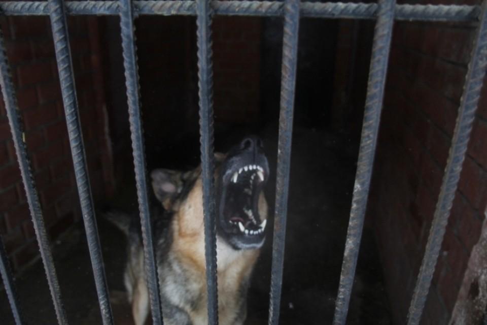 Дикие животные искусали 83 кузбассовцев