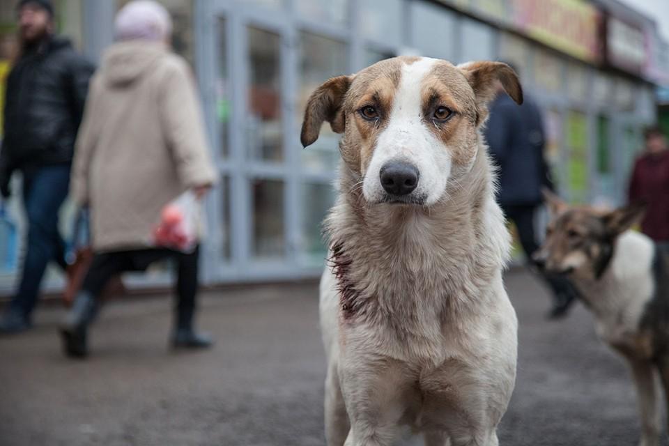 В онлайн-сервисе «Хвосты и лапки» выложены анкеты сотен собак и кошек