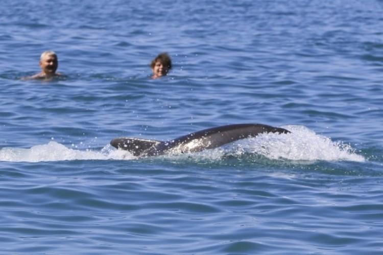 Огибая купающихся людей, пятеро дельфинов подплыли к берегу и начали выныривать из воды прям около туристов
