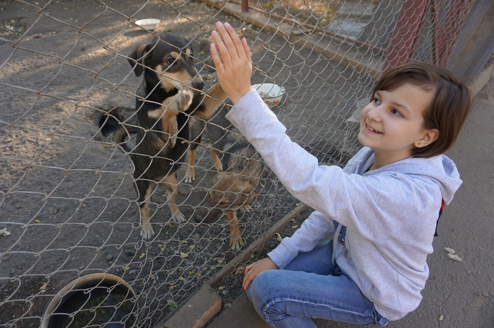 Как бы хорошо не ухаживали за собаками в приюте, каждая из них ждет своего любящего хозяина