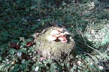 Превышение радиации в грибах в некоторых регионах Беларуси - в 6 раз! Вот какие грибы - аккумуляторы