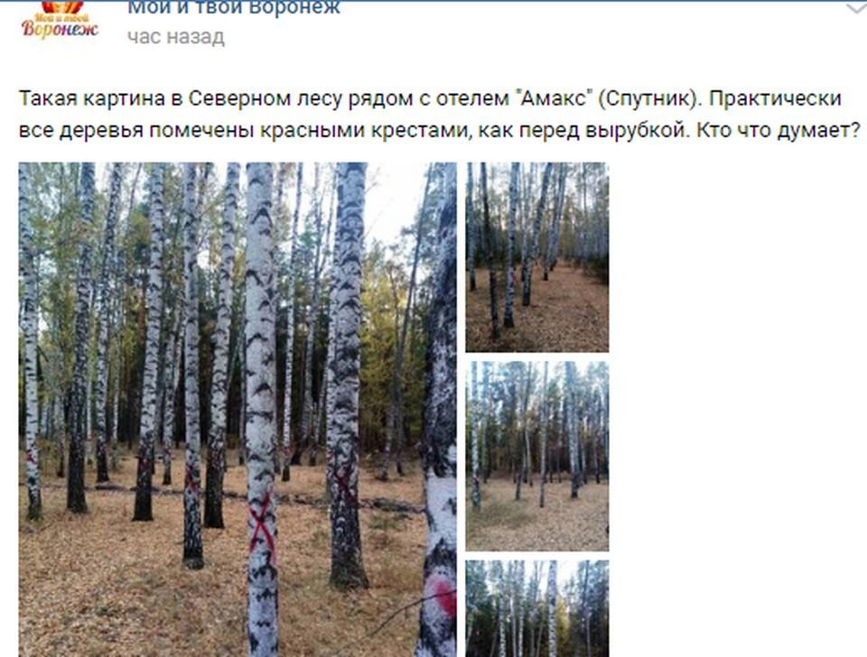 Часто такие кресты означают скорую гибель деревьев.