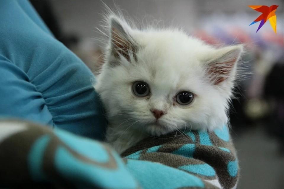 Сам живодер не скрывает, что расправился с котенком намеренно. Фото: Юлия ПЫХАЛОВА