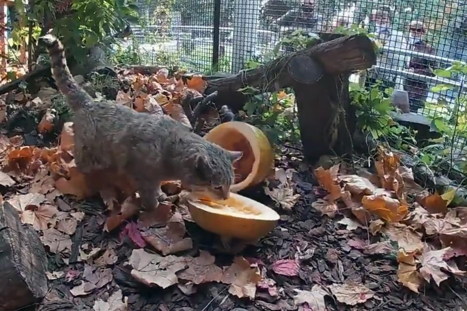 Пользуясь случаем, представители зоопарка также поблагодарили посетителей за то, что они приносят зверям урожай