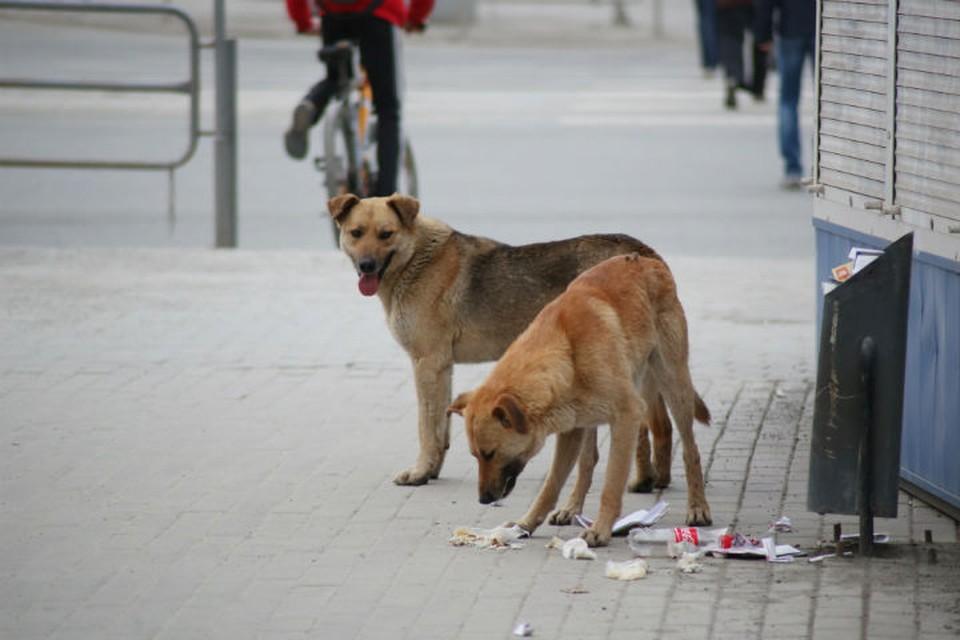 Сейчас в Ярославской области для бездомных зверей нет приютов