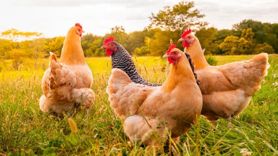 С момента начала падежа птиц был создан Оперативный штаб при министерстве и в регионах.