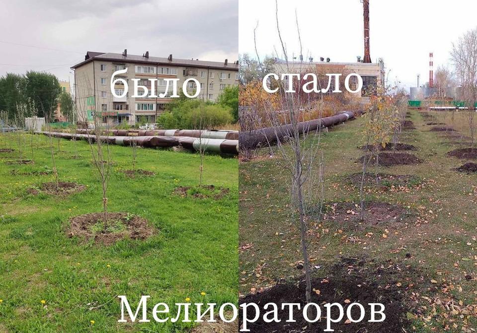 На нескольких тюменских улицах высадили новые деревья взамен неприжившихся. Фото - Комитет по связям с общественностью и средствами массовой информации.
