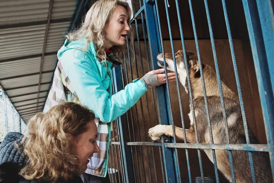 """Кожуховский приют - один из самых крупных в Москве: в нем живут более живут 2 700 собак и 300 кошек Фото: БФ """"Рэй"""""""