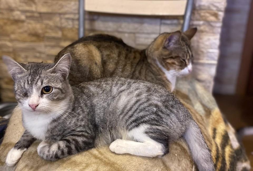 """Пара из десятка спасенных из бабушкиной квартиры на """"Волоколамке"""" котов. Фото: Инициативная группа по защите животных в Твери."""