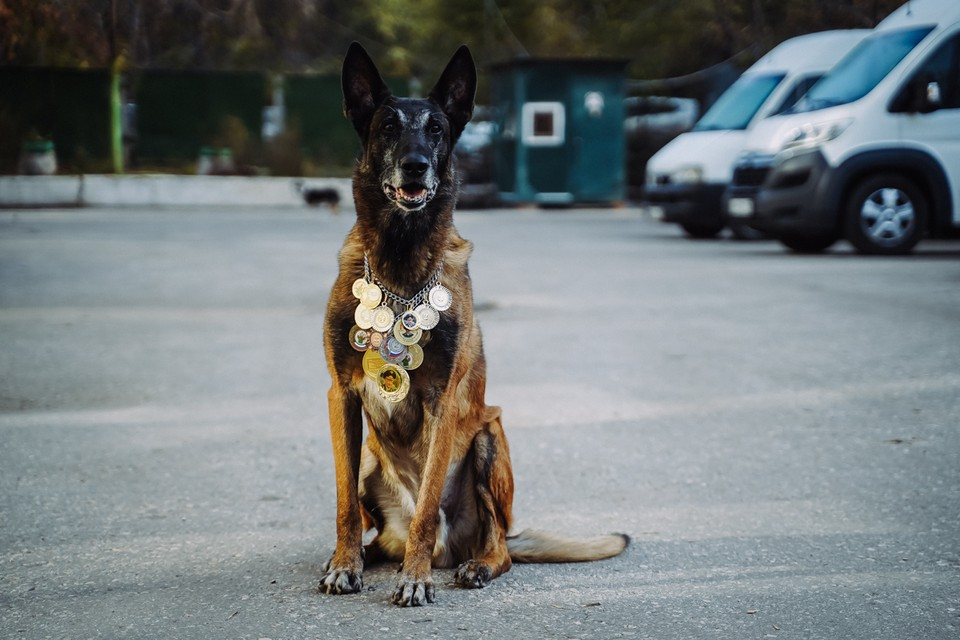Вся грудь в медалях: в Самарской таможне на пенсию ушел пес Балто, который находил 247 кг «запрещенки» за раз