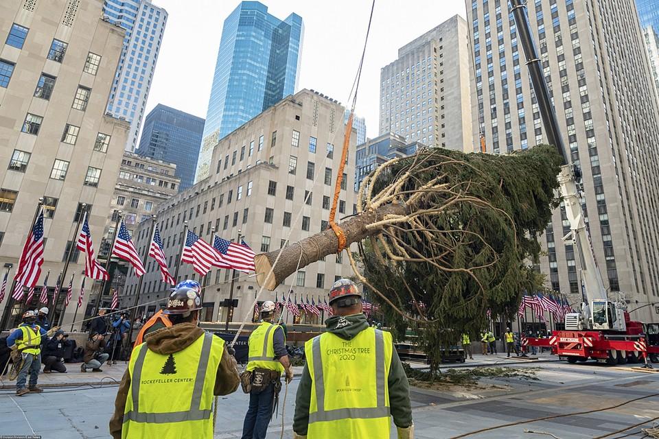 Символ Рождества привезли из небольшого города Онеотта, расположенного на севере штата Нью-Йорк