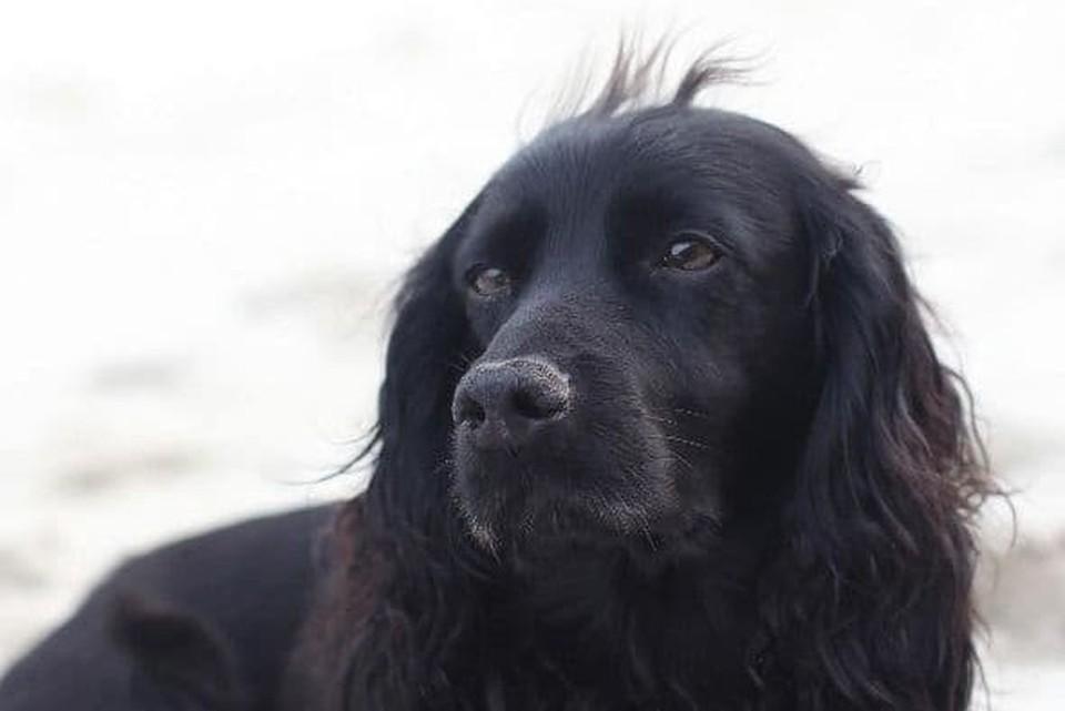 """На своей странице в Instagram Уильям написал, что погибло """"сердце семьи"""", имея ввиду собаку Лупо. Фото: инстаграм"""