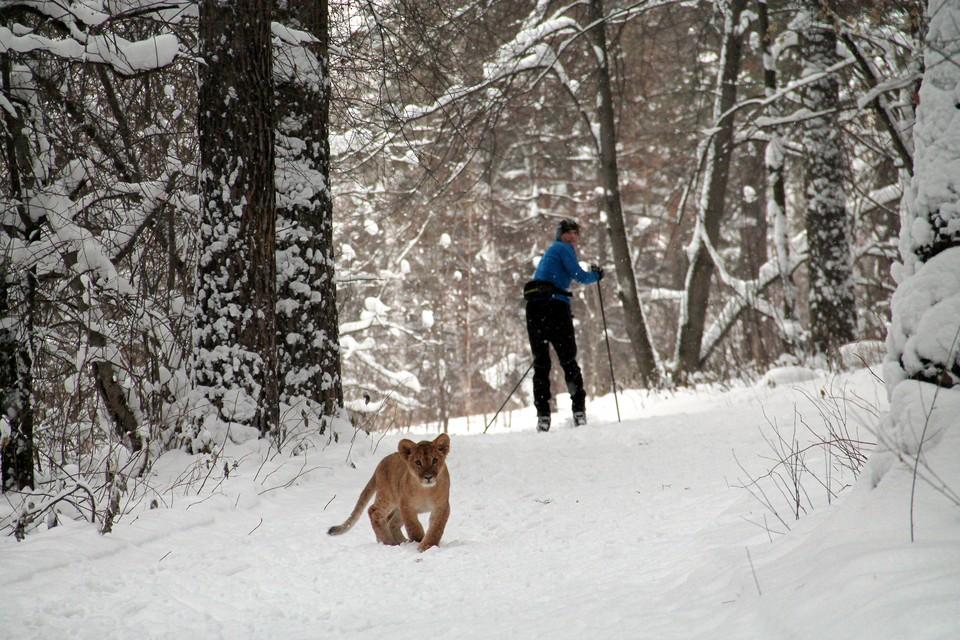 Синоптики обещают теплый и снежный декабрь