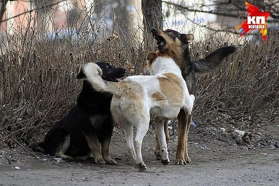 Агрессивные животные покусали девушку