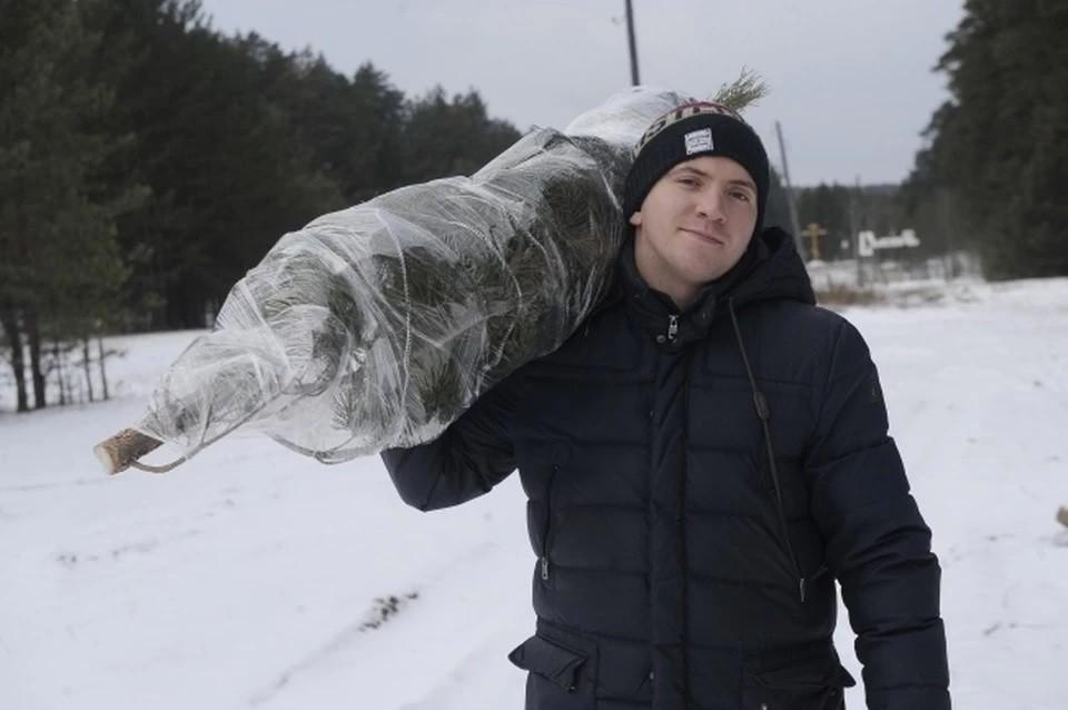 Врач: елки могут защитить от коронавируса