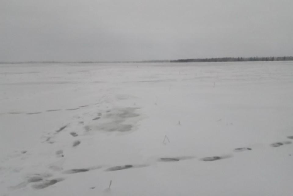 29 ноября тела северян нашел местный житель. Фото: СУ СКР по МО