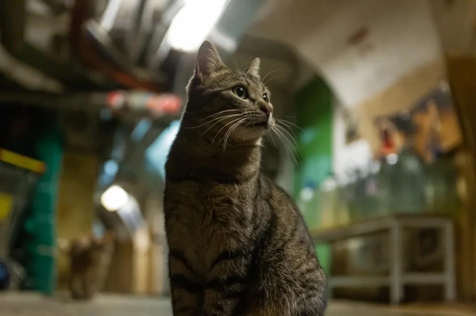 Эрмитажным котам оставили щедрое наследство от гражданина Франции.