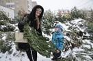 Где купить елку в Перми: публикуем список адресов