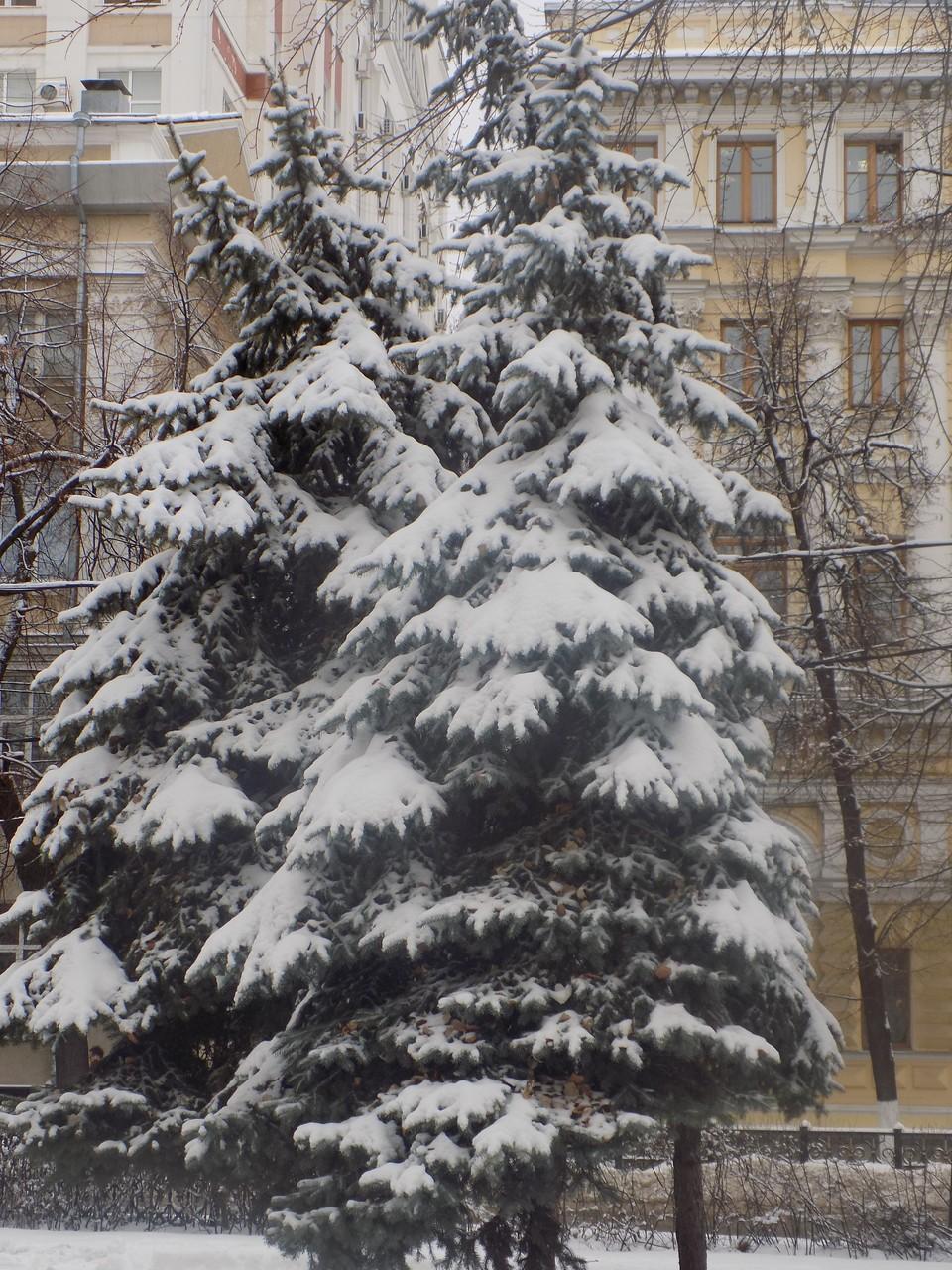 Завтра в Белгородской области будет мокрый снег, дождь и туман.