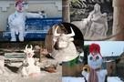 Снеговик-алкаш и целая семья медведей: Жители Тверской области лепят забавных снеговиков