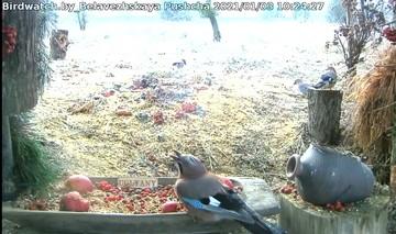 Посмотрите, какую в Беловежской пуще сделали птичью столовую. И в ней едят не только птицы!