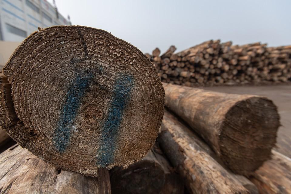 В Дальнегорском и Тернейском районах Приморья нелегально вырубили около 3 тысяч кубических метров древесины